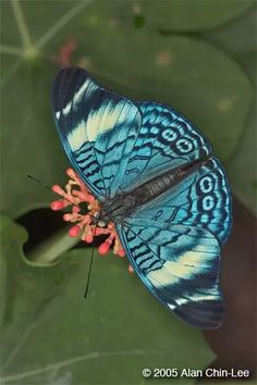 FLMNH - Butterfly Rainforest - Image Gallery