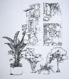 Tree / Shrub / Plant - Sketches