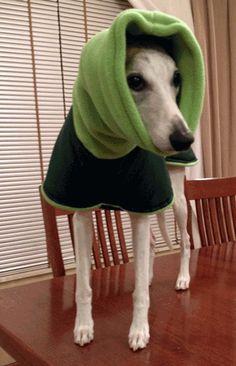 anderson dog coat ideas