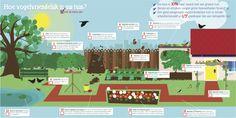 Infographic over het vogelvriendeiljk maken van je tuin voor de Vogelbescherming