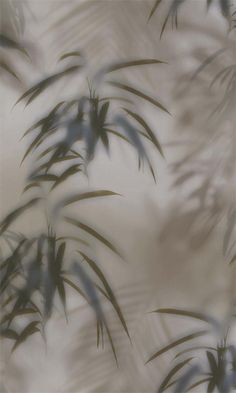 Taupe & Forest Green Tropical Wallpaper R5698 - Free Sample