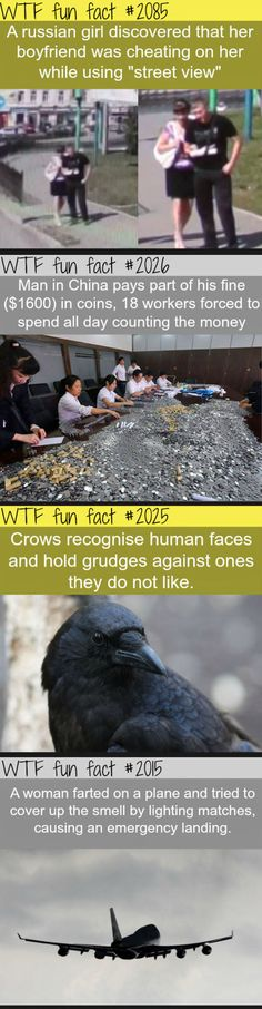 12 Interesting WTF Fun Facts