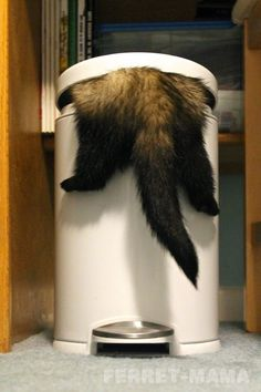 Ah ! Pris la main dans le sac ! Enfin, la tête dans la poubelle, quoi...