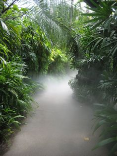 smoke on the water Tropical Forest, Tropical Paradise, Tropical Garden, Beautiful World, Beautiful Places, Nature Pictures, Amazing Nature, Wonders Of The World, Mother Nature