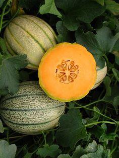 Dinnye termesztése a kiskertben Fruits And Vegetables, Vegetable Garden, Pumpkin, Backyard, Gardening, Art, Botany, Flowers, Art Background