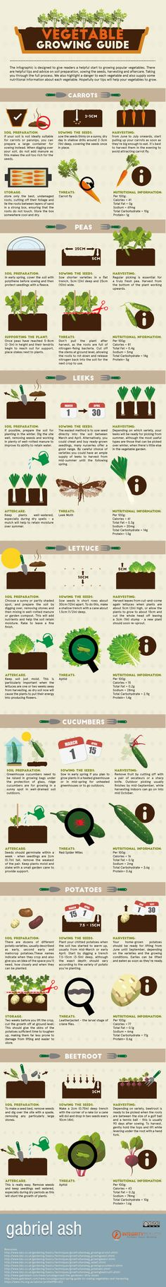A Vegetable Growing Guide
