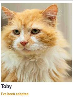 This is the story of a stray FIV+ cat named Toby who was taken to Wake County Animal Center in Raleigh, North Carolina. Thankfully, Toby is now in his forever home after being saved by Animal Shelters, Cat Names, North Carolina, Cats, Animals, Gatos, Animales, Animaux, Animal Shelter