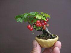 Bessen bonsai