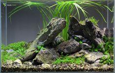 40 Liter nano Aquarium, 2 Wochen alt.