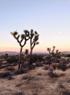 USA Travel Inspiration - Extra time before the fest? Explore the nearby Joshua Tree National Park! Click through to see The Fresh Exchange's travel guide & plan your Coachella road trip.