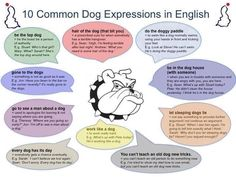 Common dog expressions.