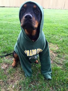 GO RAMS! Colorado State University fans are the cutest.