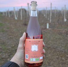 Der Rosato ist ein fein sprudelnder, nach Erdbeere und Kirsche duftender Genuss. Am Gaumen besticht er durch eine lebendige Säure und eine gute Fülle. Der Abgang ist trocken und viel länger als es sich für einen Wein dieser Preisklasse gehört. 89/100 Punkte KB