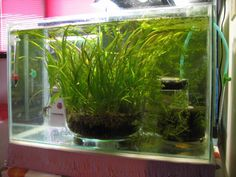 planting in glass for a bare bottom tank