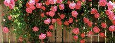 Imagenes De Flores Para Facebook   capa facebook - flores