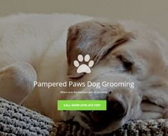 When my dog groomer started her own business, I wanted to help. So I created a mobile-friendly website and focused efforts on local search visibility.