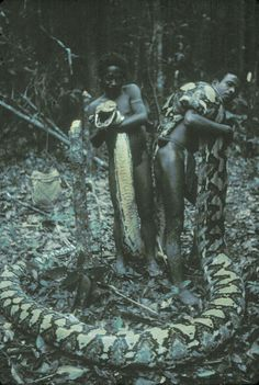 Giant snakes commonly attacked modern hunter-gatherers in Philippines Read more at http://news.mongabay.com/2011/1213-hance_pythons_luzon.html#U7W4ggbEZ3jRxaOH.99