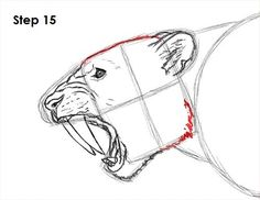 How to Draw a Saber Tooth Tiger, Step by Step, Dinosaurs