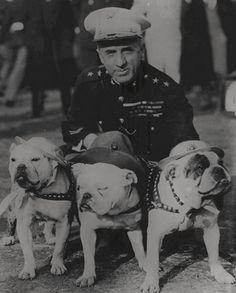 """Baggy Bulldogs. """"""""Anti grumpy cat battalion """""""""""