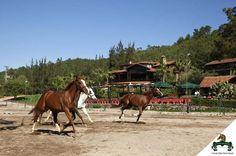 Cenneti görmek için #Viverde #Hotel #Berke #Ranch'e gelmeniz yeterli..  #Kemer #Nature #Horse #Discovery #Enjoy #Day #View