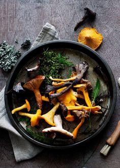 Chanterelles, Buckwheat Crepes and Kale | The new nordic, Simon Bajada