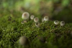 https://flic.kr/p/Mv6ocf | Sur la route des champignons gris. By Melti Lanista