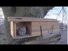 We have put this video together to add some visual support to the written instructions we send out with all our Owl Boxes. Owl Nest Box, Owl Box, Homemade Bird Houses, Bird Houses Diy, Bird House Feeder, Diy Bird Feeder, Bird House Plans, Bird Boxes, Nesting Boxes