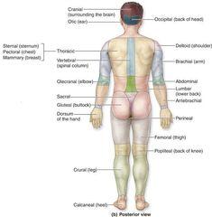 surface anatomy landmarks - Google Search