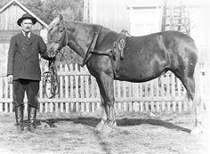 Lepsämän Riuskan talon isäntä Hugo Kindt hevosineen todennäköisesti 1920-luvulla. Kuva Elias Sirenius. Horses, Animals, Museums, Animales, Animaux, Animal, Animais, Horse