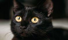 animal pupils