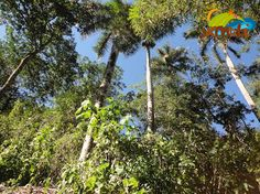 Vegetación en Cascadas de Don Juan