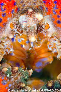 Puget Sound King Crab...    ;)