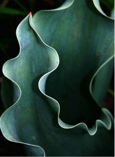 Mother nature is amazing...the little touch of red on the tip of this succulent- sublime.