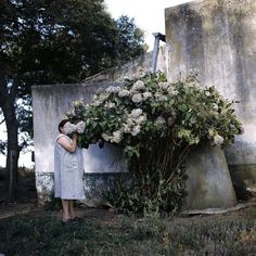 Hydrangeas. Buenos Aires Argentina. Alessandra Sanguinetti. 1999.  Part of Spring Blooms floral themes as explored through the archive images of Magnum photographers.  #AlessandraSanguinetti/#MagnumPhotos by magnumphotos