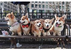 Corgin' it up in the city.  Pawpalswithannie.com Photo credit: @wallythewelshcorgi #subscriptionbox #review #coupon #products #posts #puppies #dogs #toys #treats #accessories #DIY