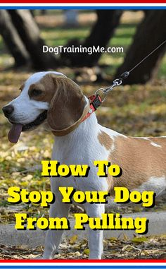 Stop dog from pulling on leash, and it will be easier than you realize! Learn the 8 most important things (hint: your posture matters big time) to know by reading this article!