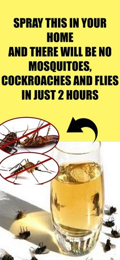 Spray This In Your Home And There Will Be No Flies, Cockroaches Or Mosquitoes In Only 2 Hours!Spray This In Your Home And There Will Be No Flies, Cockroaches Or Mosquitoes In Only 2 Hours! Health Remedies, Home Remedies, Natural Remedies, Flea Remedies, Roach Remedies, Aquaponics, Pest Control, Bug Control, Mosquito Control