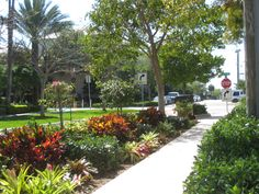 Get advice for taking pleasure in a good looking Florida Gardening, field, or yard. Our professionals tell you all the essentials to really Florida Gardening Xeriscape Plants, Xeriscaping, Landscaping Plants, Front Yard Landscaping, Landscaping Ideas, Acreage Landscaping, Florida Landscaping, Florida Gardening, Tropical Landscaping