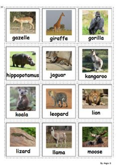 Zoo animal printable cards. Great for matching game ... |Printable Pecs Pet