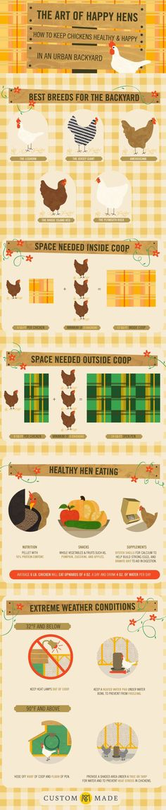 Chicken Coop - Keeping healthy and happy in an urban backyard.- Infographic Building a chicken coop does not have to be tricky nor does it have to set you back a ton of scratch. Easy Chicken Coop, Backyard Chicken Coops, Chicken Coop Plans, Building A Chicken Coop, Backyard Farming, Chickens Backyard, Backyard Coop, Urban Chicken Coop, Chicken Life