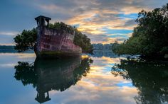 Floating Forest, Homebush Bay, Sydney, Australia