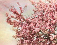 Cherry Blossoms Print, décor pastel pour une pépinière, conte de fées, des arbres roses, jaunes, Wonderland, 5 x 7 ou 8 x 10 sur Etsy, $17.02 CAD