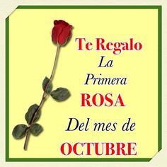 Te regalo la primera rosa del mes de Octubre