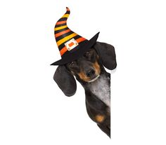 If you love dachshunds as much as we do, check out these dachshund   inspired items. https://www.pawsomedoggie.com/collections/dachshund