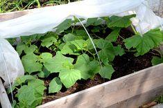 FARBROR GRÖN: Odla i pallkrage - så får du till en bra jord