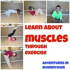 learn about muscles through exercise