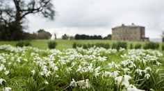 Go snowdrop spotting on a winter walk with the National Trust NI