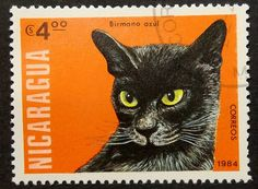 Items similar to Cat -Birmano azul -Handmade Framed Postage Stamp Art 14911 on Etsy Postage Stamp Art, Salvador, Cat Cards, Stamp Collecting, My Stamp, Cute Cats, Funny Cats, Cat Lovers, Kitty