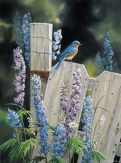 the garden fence. Blue bird and delphiniums.On the garden fence. Blue bird and delphiniums. Pretty Birds, Love Birds, Beautiful Birds, Bluebirds, Bird Watching, Bird Feathers, Belle Photo, Bird Houses, Animals