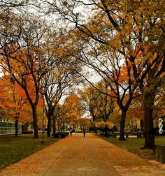 """Wayne State Univ on Twitter: """"Photo of the Day: Fall by the Art building Submitted by Maisha Rahman. Share your pics at https://t.co/lApfHvYByM. https://t.co/CuqeFfoPZR"""""""